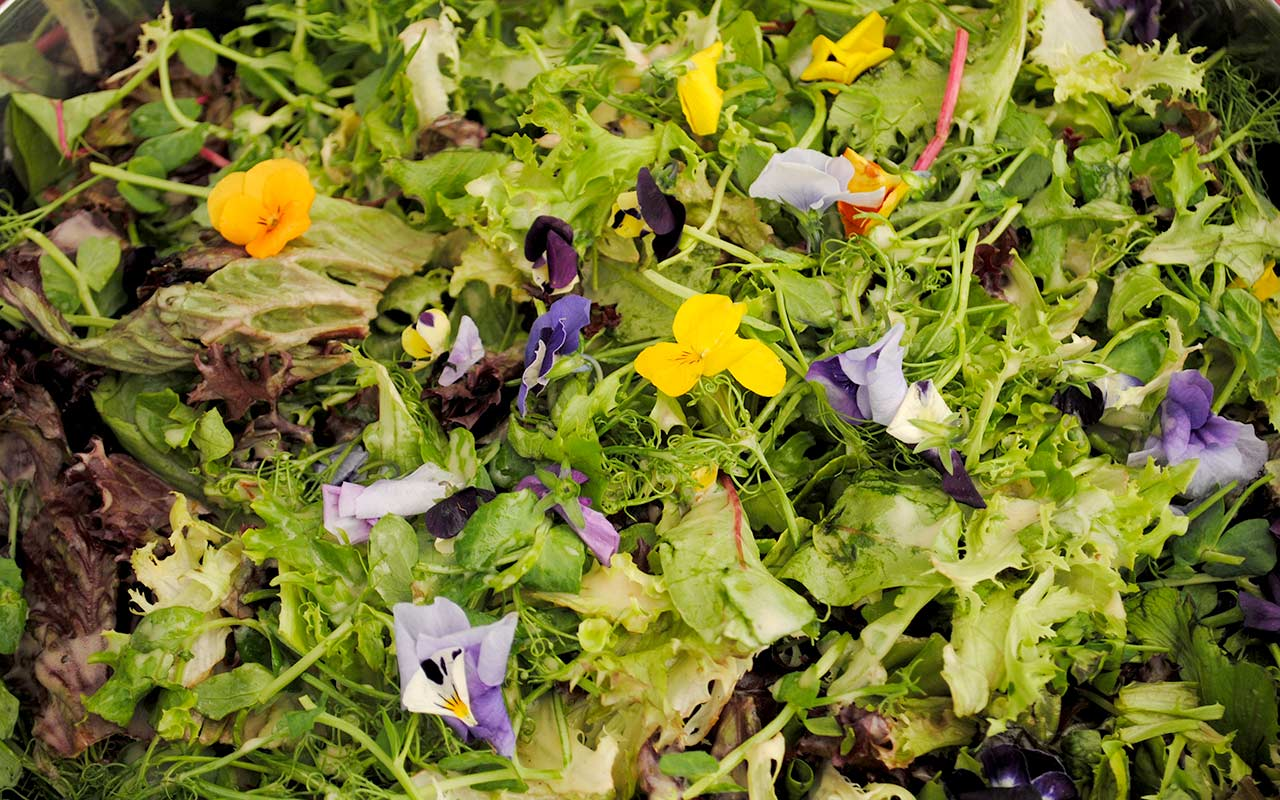 Fresh green salad with edible viola flowers